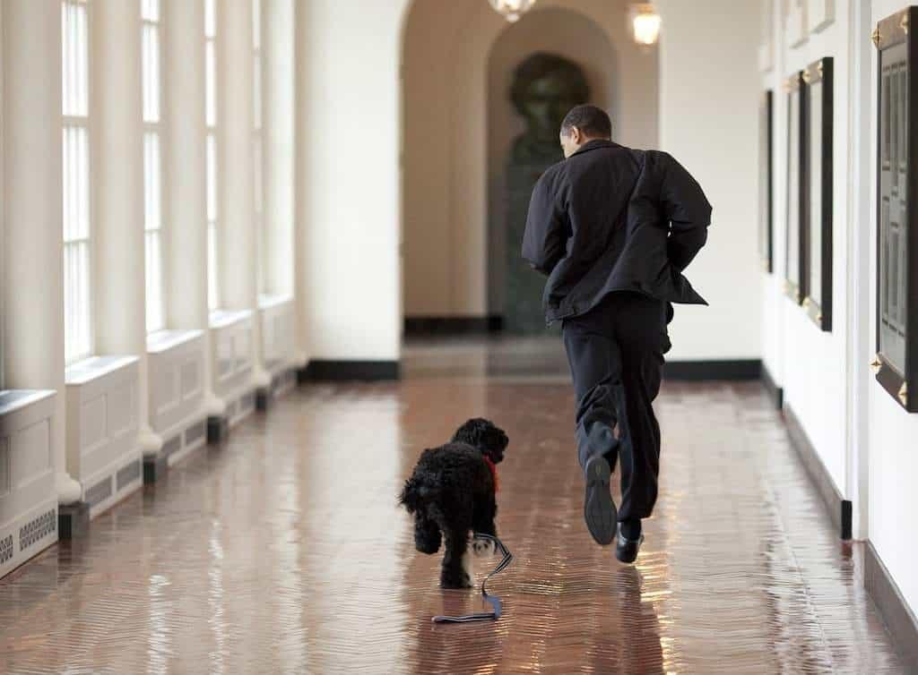 Obama corriendo con su perro de agua portugués