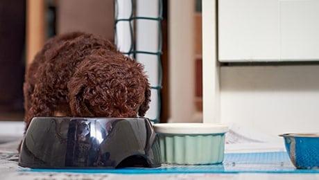 Cantidad comida perro de agua cachorro