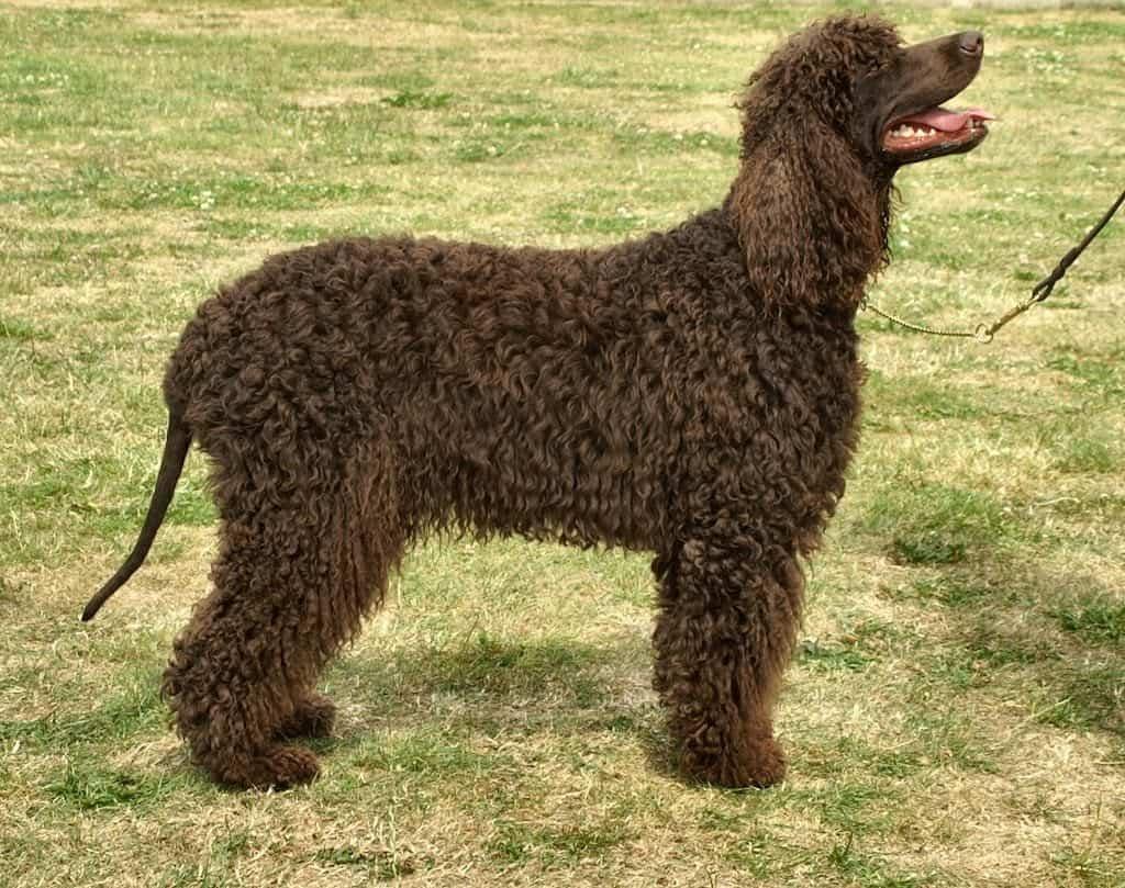 Perro de color marrón