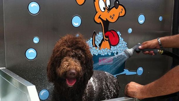Lavar perro de agua con champú