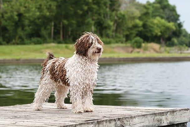 Eliminar rastas o nudos en el perro de agua