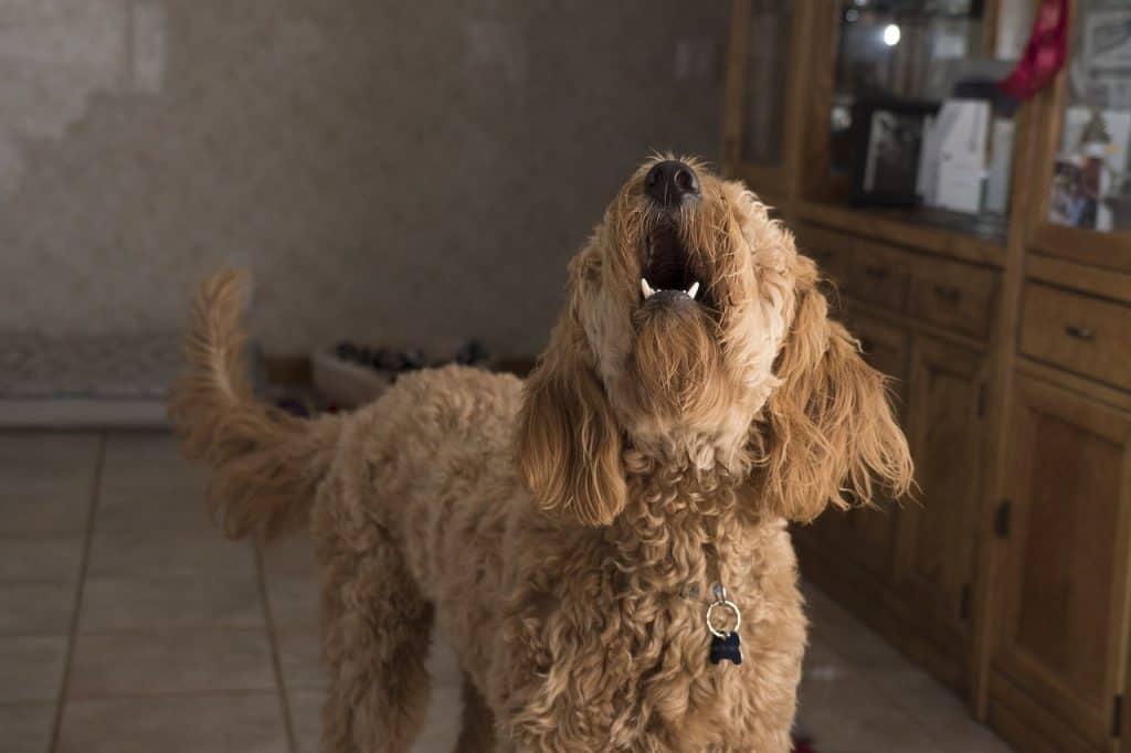 ¿Cómo evitar el ladrido de un perro?